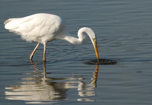 Great White. Fishing
