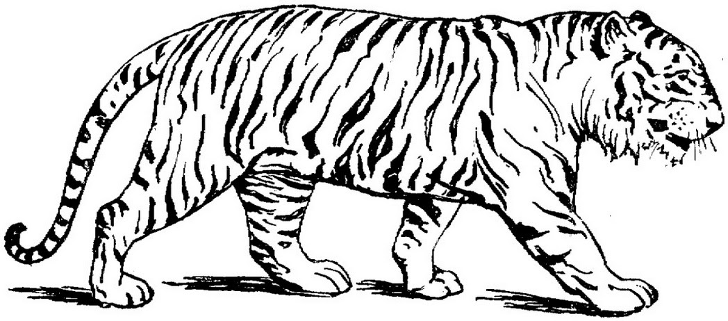 8500 House Cats Coloring Pages Pictures