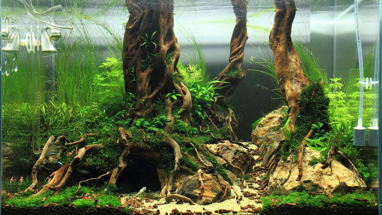 A collection of beautiful aquascapes u12 Kristelvdakker  Total