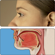 Woman's profile and anatomical drawing of mouth and pharynx.