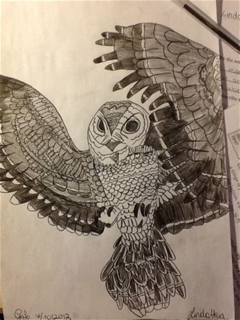 owl drawing cool animal pencil  paper hobby birds