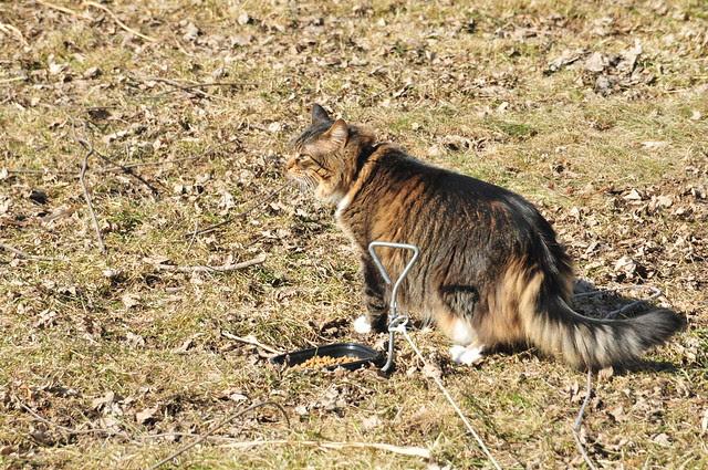 Nala explores the great outdoors