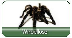 Vogelspinnen und Wirbellose günstig kaufen
