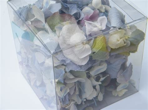 Hydrangea petals freeze dried   Dried flowers   Daisyshop