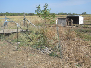 Pecan Tree Area with Old Hand-Pulled Fencing