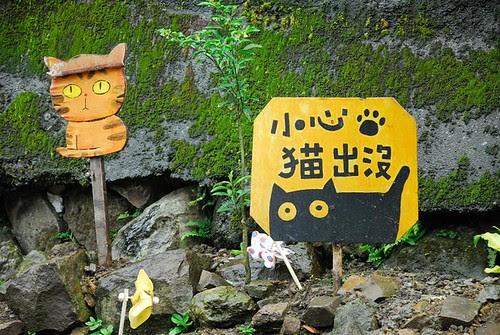 小心貓出沒