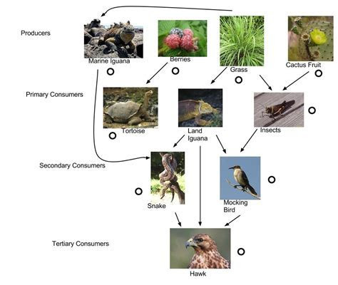 Tortoise Food Web   ThingLink