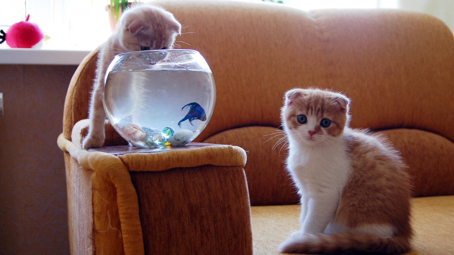 kittens aquarium fish hunt [1920x1080]