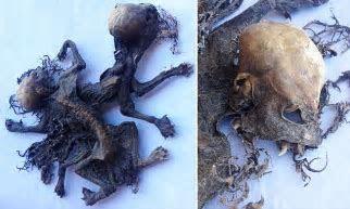 Chile farmer says he has found remains 'Chupacabra