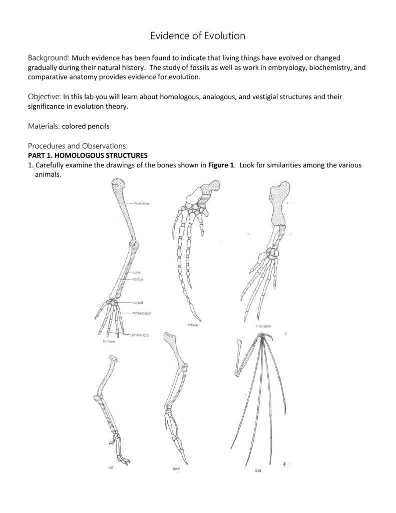 Homologous And Analogous Structures Worksheet Photos  Roostanama