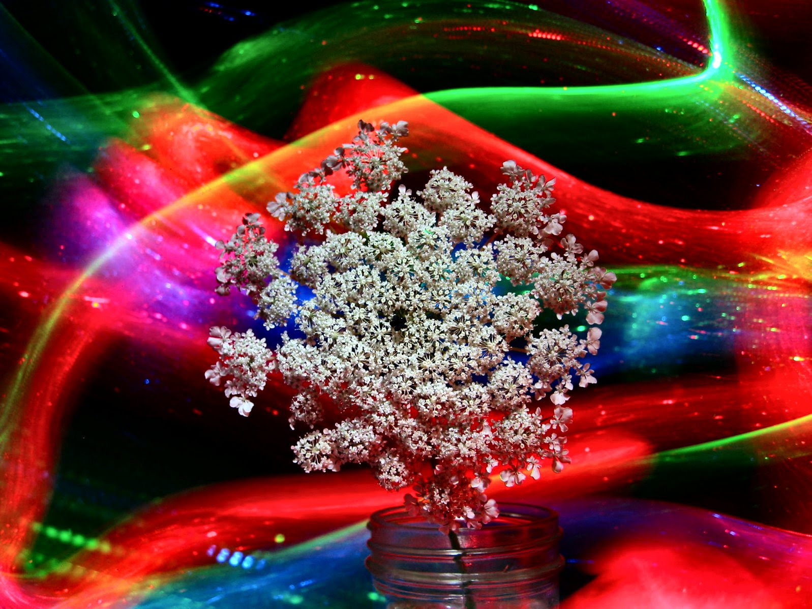 Glactic Space Weed - Queen Annes Lace in Space - soul-amp.com