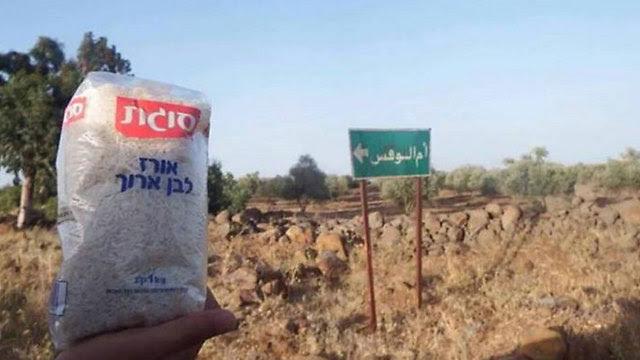 Israeli rice in Qunietra province, Syria