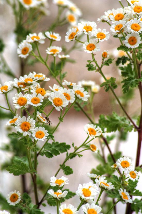 fioritura 10