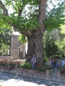 Árbol de la Piedra