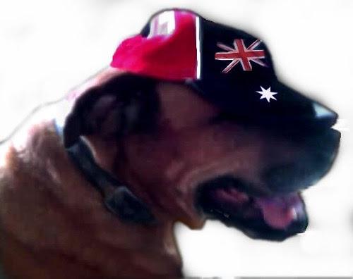 Australia Day dog