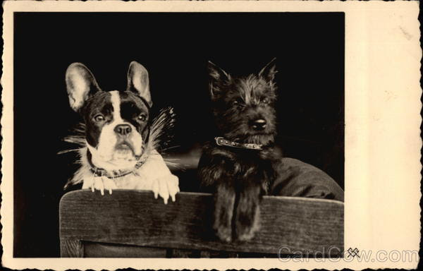 Two Dogs on Chair Postcard