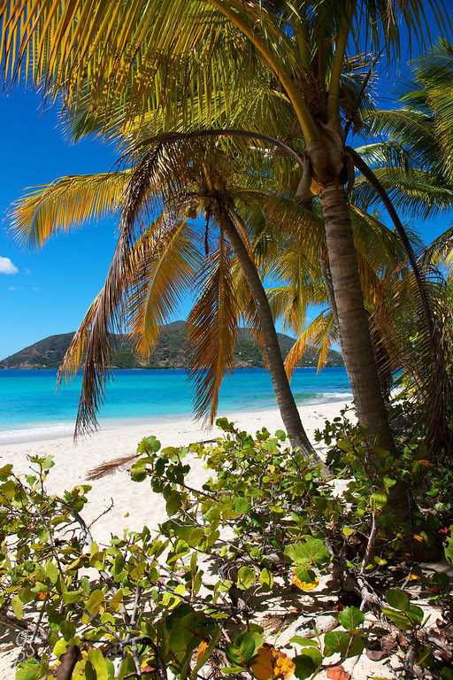 palm tree island beach caribbean bvi