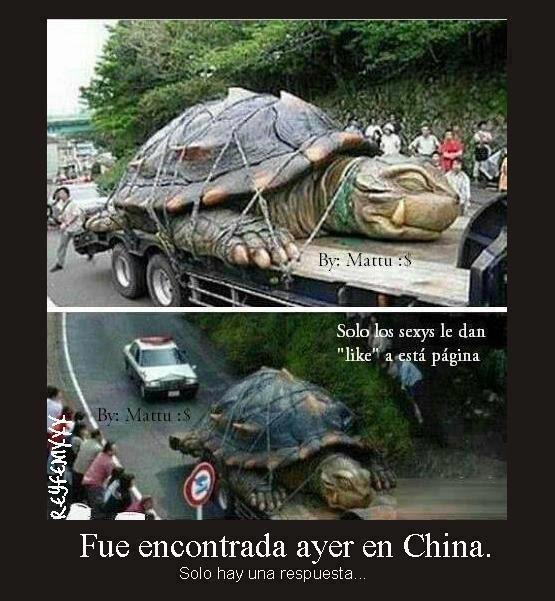 tortuga-gigante-china