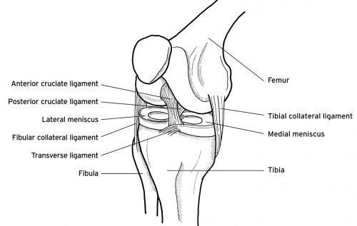Anterior View of Right Knee - El Paso Chiropractor