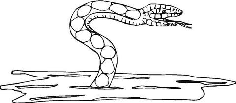 Disegno Di Serpente Dacqua Da Colorare Disegni Da Colorare E