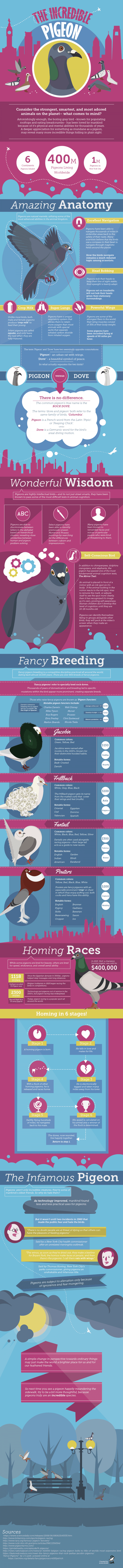 http://www.dailyinfographic.com/wp-content/uploads/2016/07/IncrediblePigeons_3-01-700x8912.png