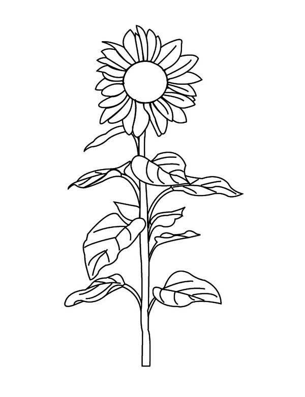 Coloring Pages Of Plant Life Cycle Coloring Home