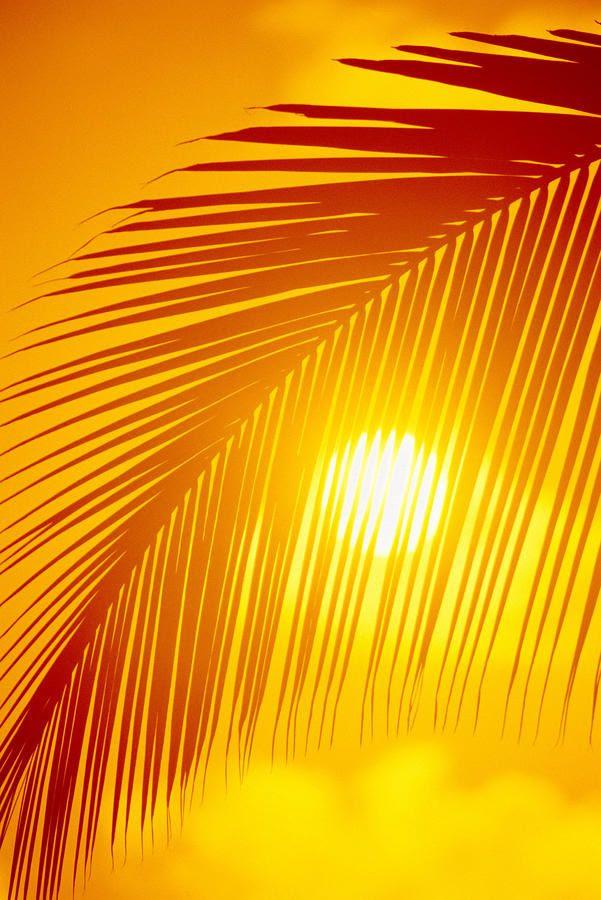 .warm sunshine.