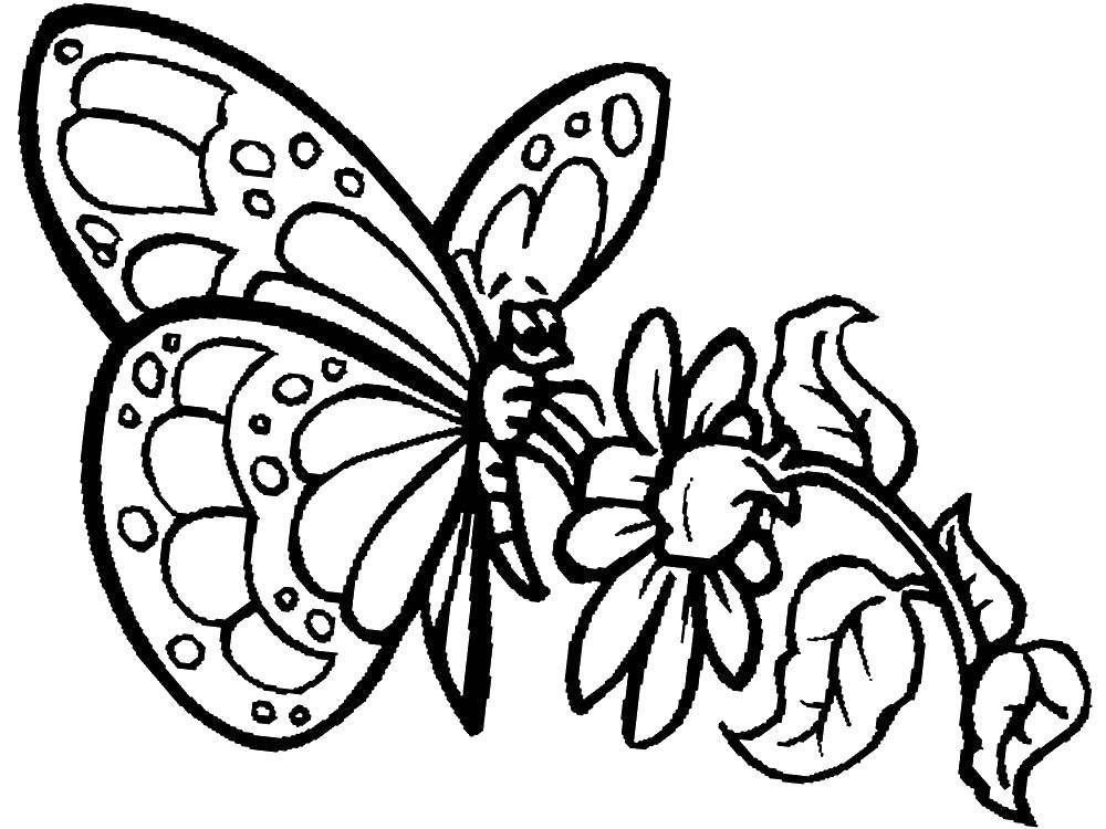 Dibujos de mariposas bonitas para colorear 6