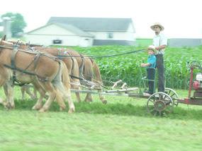 Amish op het land
