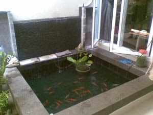 kolam ikan sederhana | berbagi itu baik