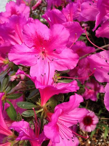 April 27: Spring Flowers