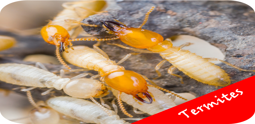 Amazon.com: How To Get Rid Of Termites - Pest Control Services ...
