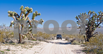 Jeep on Mojave Road
