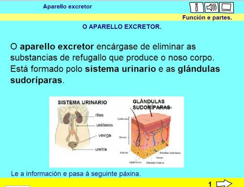 O APARELLO EXCRETOR