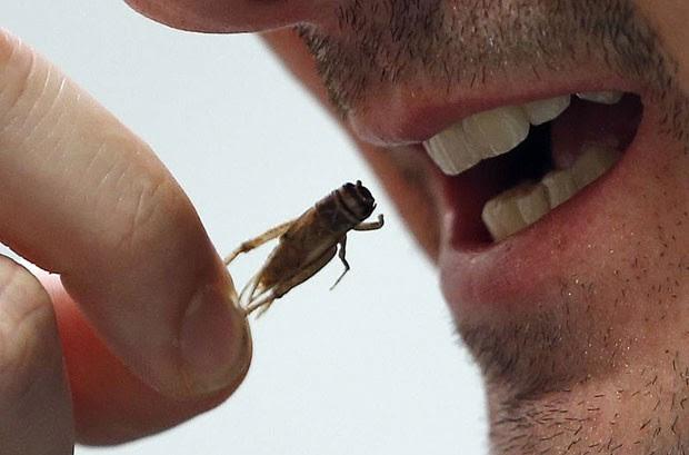 Grilo desidratado é produzido pela empresa francesa e voltado para o consumo humano (Foto: Regis Duvignau/Reuters)