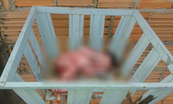 Recém-nascido é abandonado dentro de lixeira na porta de uma casa
