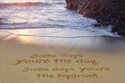 Some Days Youre The Dog Some Days Youre The Hydrant