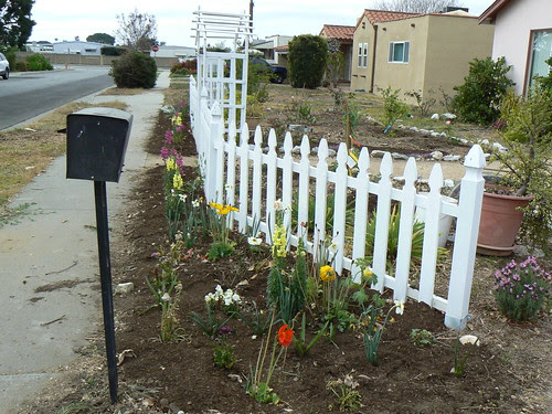 Front yard fence and bed