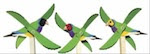 Tropical Finch Whirligig Woodworking Plan - fee plans from WoodworkersWorkshop® Online Store - whirligigs,whirlygigs,full sized patterns,woodworking plans,woodworkers projects,blueprints,drawings,blueprints,how-to-build,MeiselWoodHobby