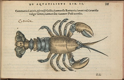 Cammarus Latinis