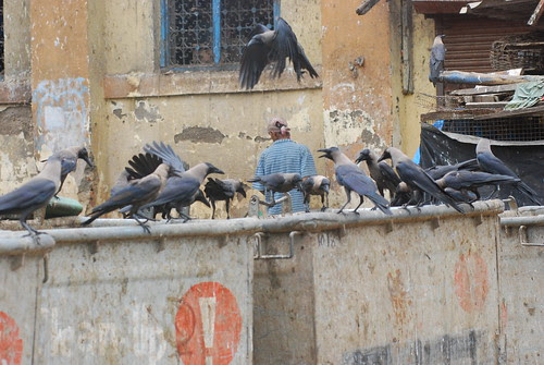 The Parliament Of Scavenger Crows In Session..Discussing Ordinance And Recession by firoze shakir photographerno1
