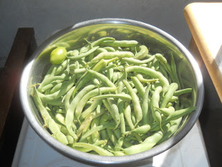 Garden 2014 October Green Beans