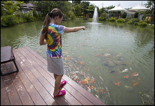 Feeding the Fish at Phuket Botanic Garden