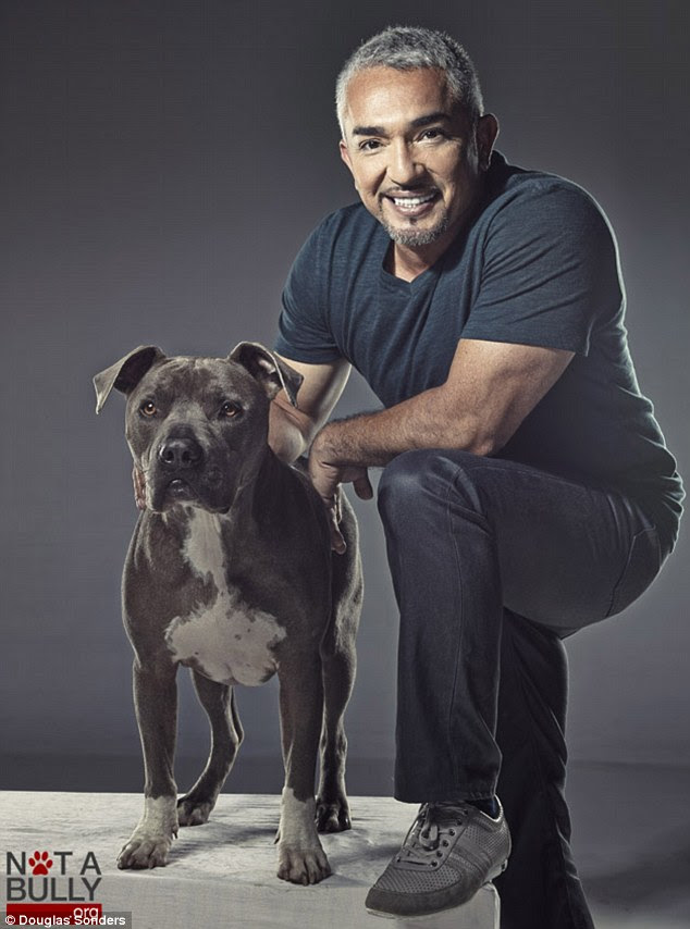 Buddies: Cesar Millian (pictured with his dog Junior) appeared in the campaign and were filmed with Mr Sonders for a National Geographic documentary about pit bulls