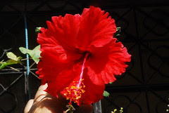 Do Flowers That Die on Earth Bloom In Paradise by firoze shakir photographerno1