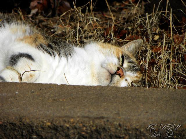 DSCN2745 Callie Co Kitty