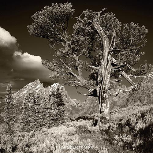"""Patriarch"" Grand Tetons National Park  By Robert Park  http:www.robert-park.com by Robert Park Photography"