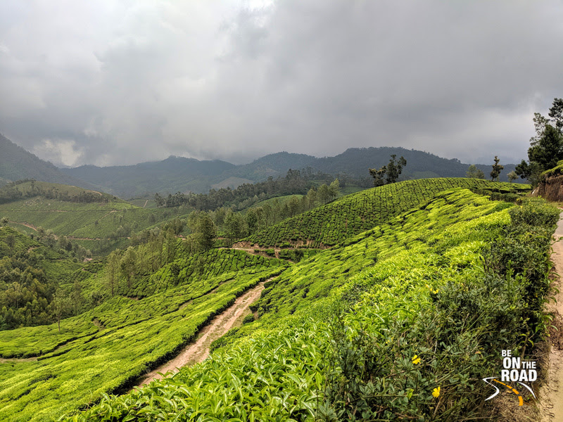 The land of the tea estates