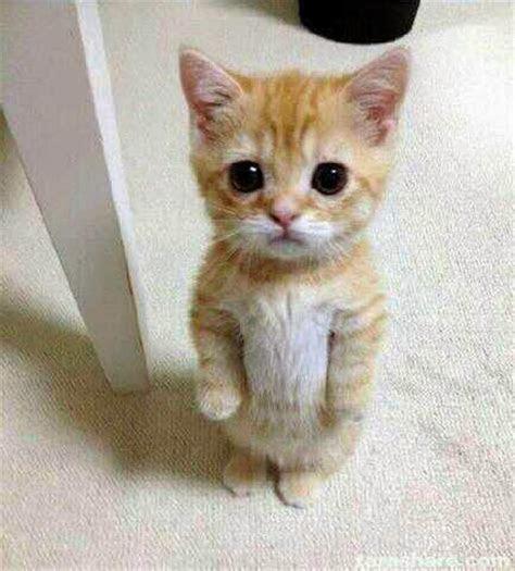 gambar lucu kucing imut  lucu