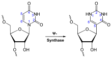 Synthesis of Pseudouridine.svg
